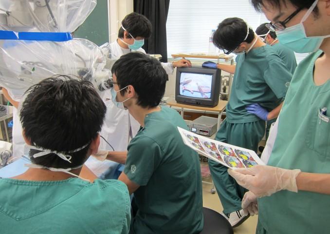 資料片手にモデルを使った模擬解剖実技。
